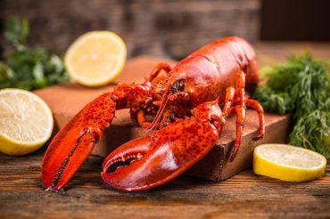 Guia frutos do mar: conheça lagosta os benefícios da lagosta