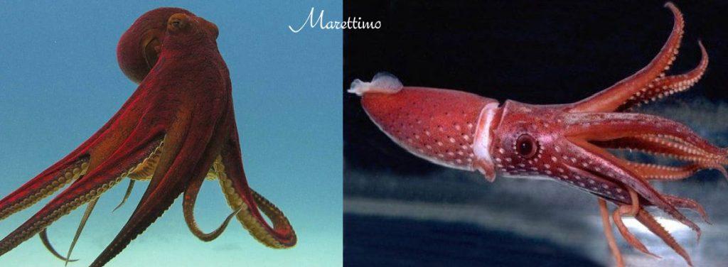 Guia frutos do mar: por que comer lula e polvo?